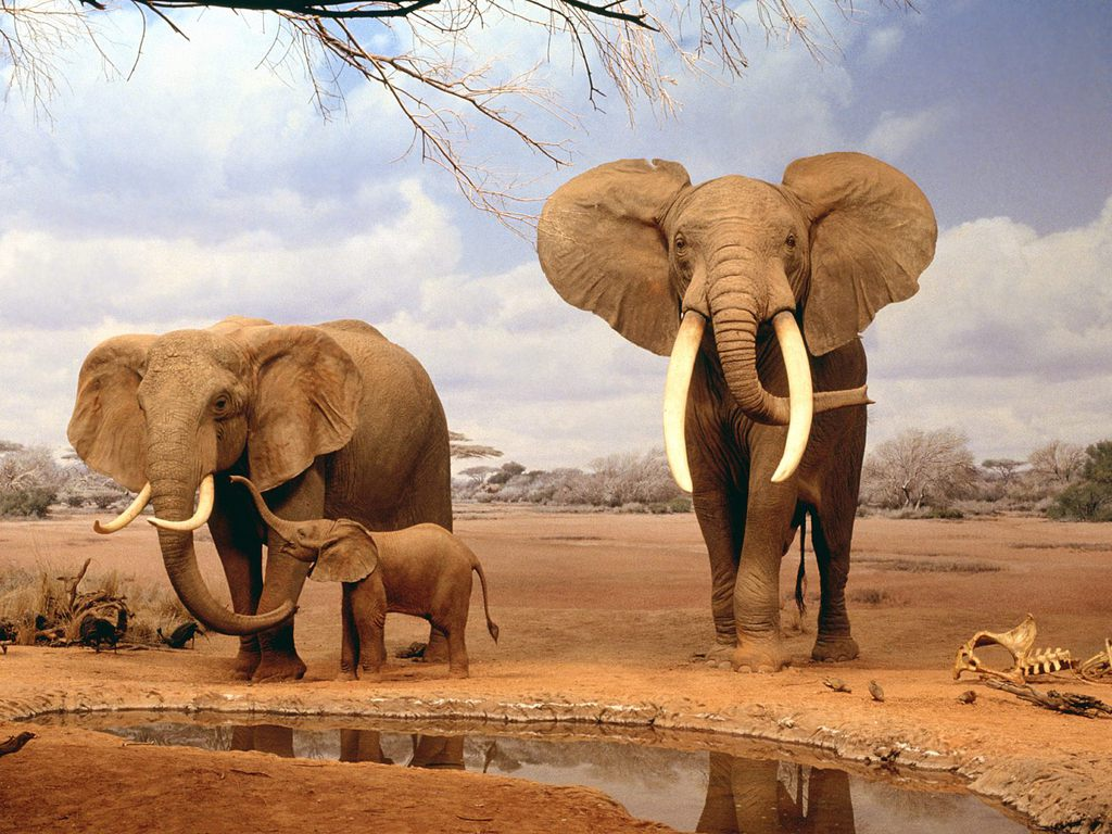 world's largest living animal