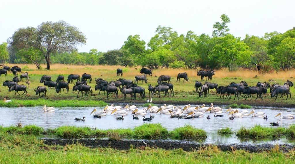 Top 10 Wildlife Reserves in the world, Kafue National park