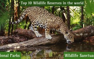 Top 10 Wildlife Reserves in the world