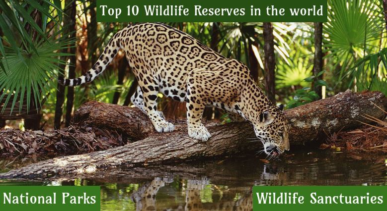 Top 10 Wildlife Reserves in the world, National Parks, Wildlife Sanctuaries