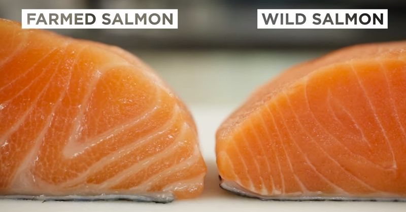 Top 10 foods that are banned across the world, Farm Salmon
