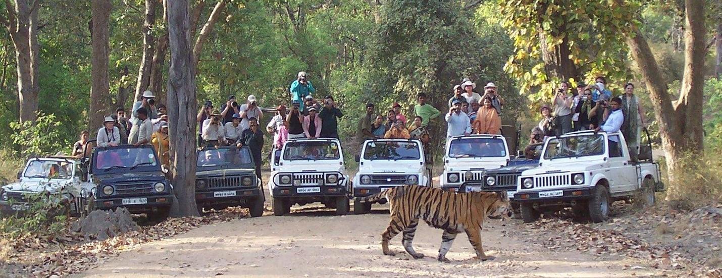Top 10 Wildlife Reserves in the world, Bandhavgarh national park