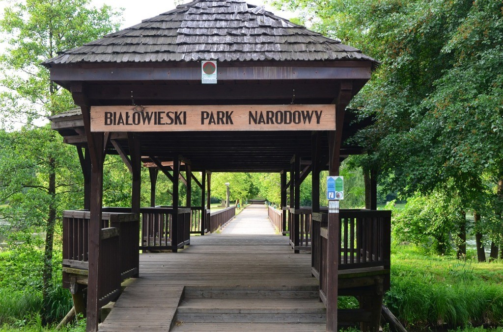 Top 10 Wildlife Reserves in the world, bialowieza national park