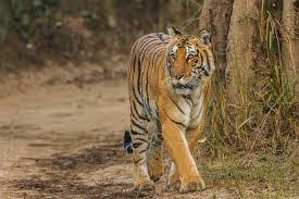 Top Attractions In Jim Corbett National Park That You Should Check